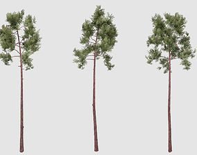 3D Pine tree plant