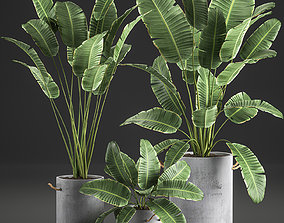 3D Decorative banana palms in flower pots for the interior