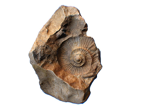 Ammonite Fossil Countermold 3D model