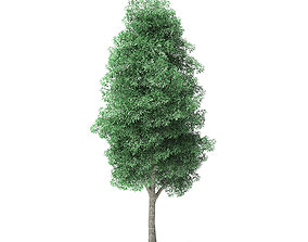 Green Ash Tree 3D Model 9m green
