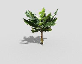 3D model low-poly shrub banana tree