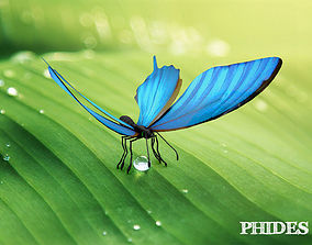 Butterfly 1 3D model animated