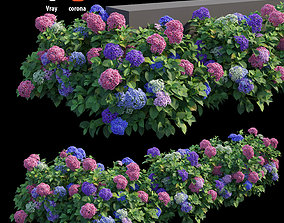 3D Hydrangea Plant set 26