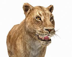 realtime Lion Female 3D