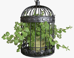 3D Ivy in a bird cage
