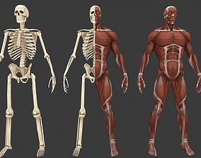Stylized anatomy model game-ready