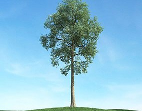 3D ideal Large Green Tree