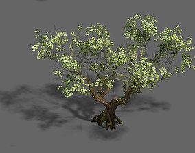 3D Plant - pear tree