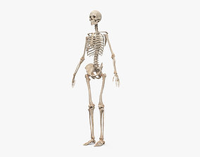3D medical Human Female Skeleton