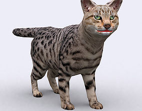 animated 3DRT - Cat