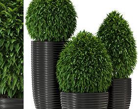 Plants collection 329 3D model