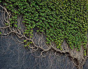 ARCHICG PLANTS IvyWalls vol 1 Model 01 3D