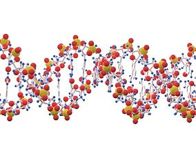 DNA color 3D model dna