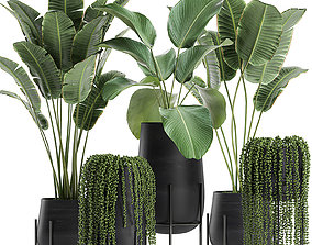 3D model Houseplants in a black pot for the interior 700