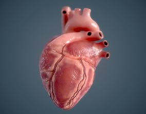 3D model game-ready Human Heart