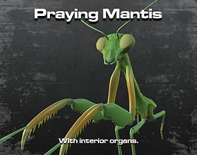 3D Praying Mantis