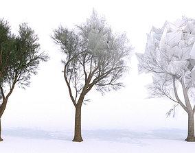 3D asset Maritime Pine Tree LOW POLY - 10