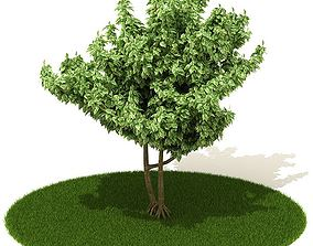 3D model Medium Tree Two Trunks