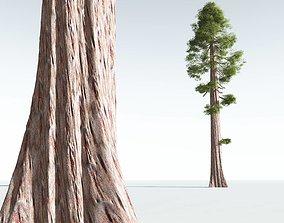 EVERYPlant Coastal Redwood 01 --12 Models--