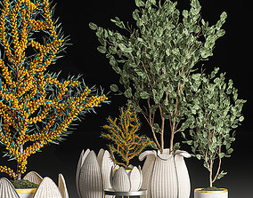 3D Decorative trees in white baskets for the interior 541