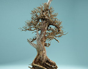3D model RAW SCAN Dead Bonsai Tree High Poly 05