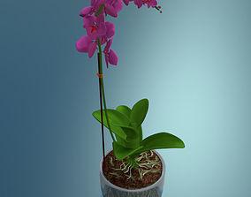 Orchid plant low poly 3D asset