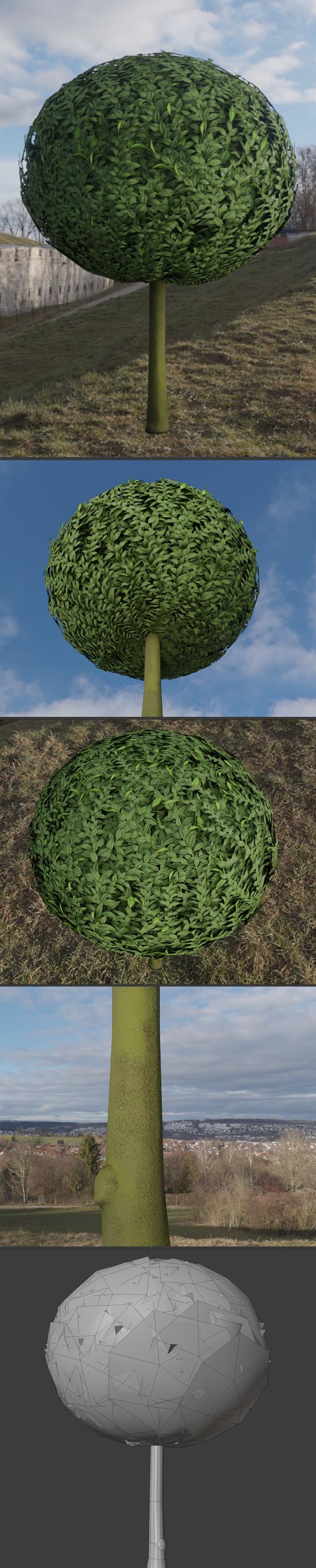 Box Tree 1 m Low-poly (Blender-2.91 Eevee)