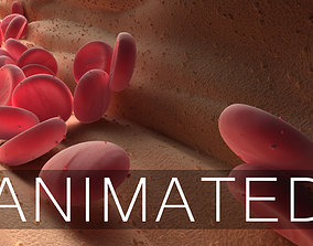 3D model Blood Flow Animated