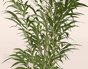 3D model Bamboo plant
