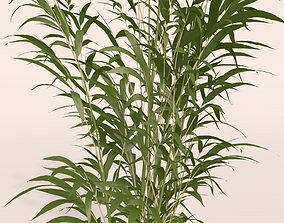Free Plant 3D Models | CGTrader