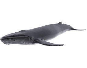 Humback Whale 3D asset