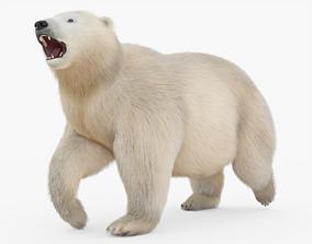 Polar Bear Rigged with Fur 3D model