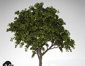 3D model XfrogPlants Large Mango tree
