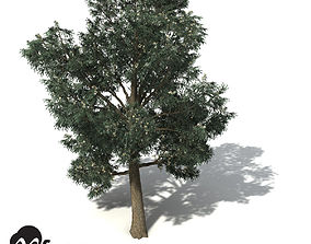 3D model XfrogPlants Blue-Gum Eucalyptus
