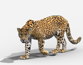 2020 Panthera onca 3D model animated