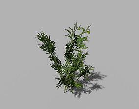 3D asset low poly river shrub