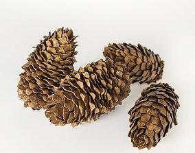 3D model Fir cones