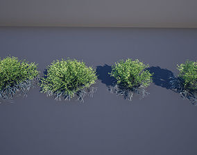 3D asset low-poly Creosote Bush
