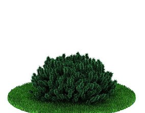 Green Bush Plant 3D model