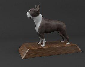 Boston Terrier Dog Model 3D