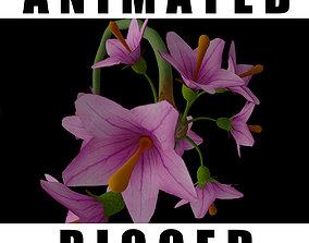 Allium Kurtzianum 3D animated
