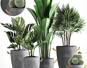Collection Exotic plants 378 3D model