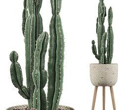 Euphorbia candelabrum 2 cactus 3D
