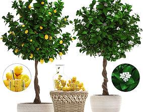 3D Lemon Tree with Fruit