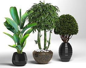 plant01 collectionplant 3D