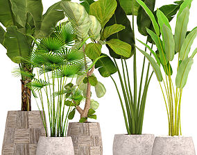 3D Collection plants