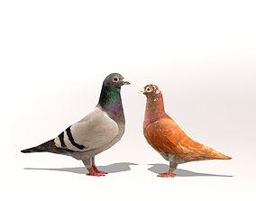 Two Pigeons 3D model