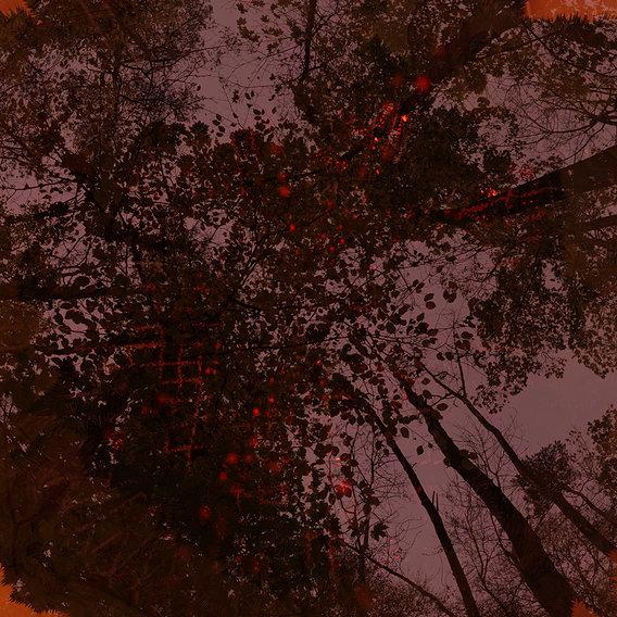 Firing Autumn