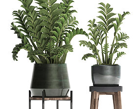 Collection Exotic plants in a pot 449 Zamioculcas 3D