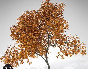 3D XfrogPlants Vine Maple